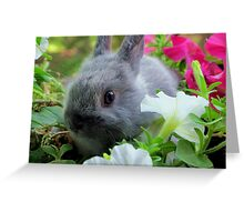 Blossoming Bunny Rabbit Greeting Card