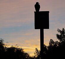 Bird on a Box by Henri Bersoux