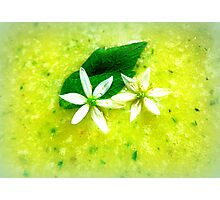 Asparagus and basil soup with wild garlic flowers Photographic Print