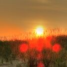 Sunset Serenade: Beach Grasses in Silhouette by Susan  Wellington