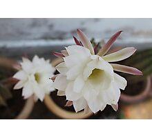 Flowers of Cactus Photographic Print