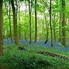 Bluebell View by BlueShift
