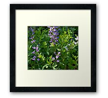 Sweetness of Sweet Peas Framed Print