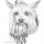 Yorkie dog drawing by Mike Theuer