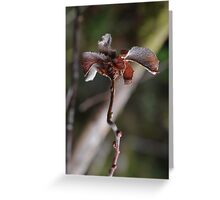 Willow Cabbage Gall, Portrait Greeting Card