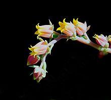 Little Pink Bells by © Loree McComb