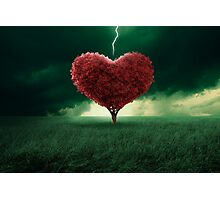 Love at first sight Photographic Print