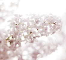 lilacs laced with rain drops~ by Brandi Burdick