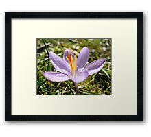 Red Blooms Framed Print