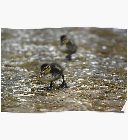 Rawr, Duckling! Poster