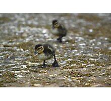Rawr, Duckling! Photographic Print