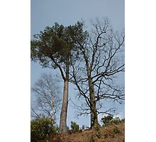 Scots Pine and Oak above Kinlochleven Photographic Print