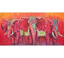 The Universal Indian Elephants, #69 Photographic Print