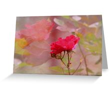 REFLECTIONS OF A ROSE Greeting Card