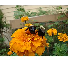 Let's Bee Buddies Photographic Print
