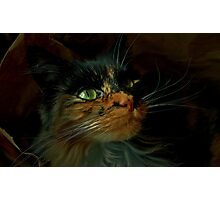 A Most Fabulous Bag of Cat Photographic Print