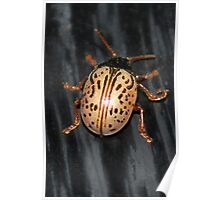Willow Leaf Beetle Poster