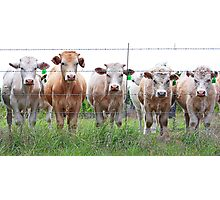 Eat More Chicken~cattle line Photographic Print