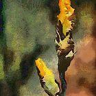 Play to Win Iris Buds in DAP Vangogh1 by Robert Armendariz