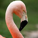 Flamingo Profile by Chelsea Brewer