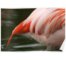 Tails from a Flamingo Poster