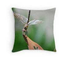 Grinning Dragonfly Throw Pillow