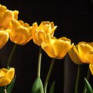 Yellow Tulips: Yellow Is Not Mellow by John Williams