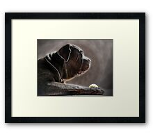 ©PetSeries I Do Not Know. Let Me Think. Framed Print