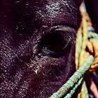 HORSE EYE by Fredy Soberanis
