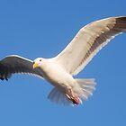 Seagull in Flight by Tori Snow