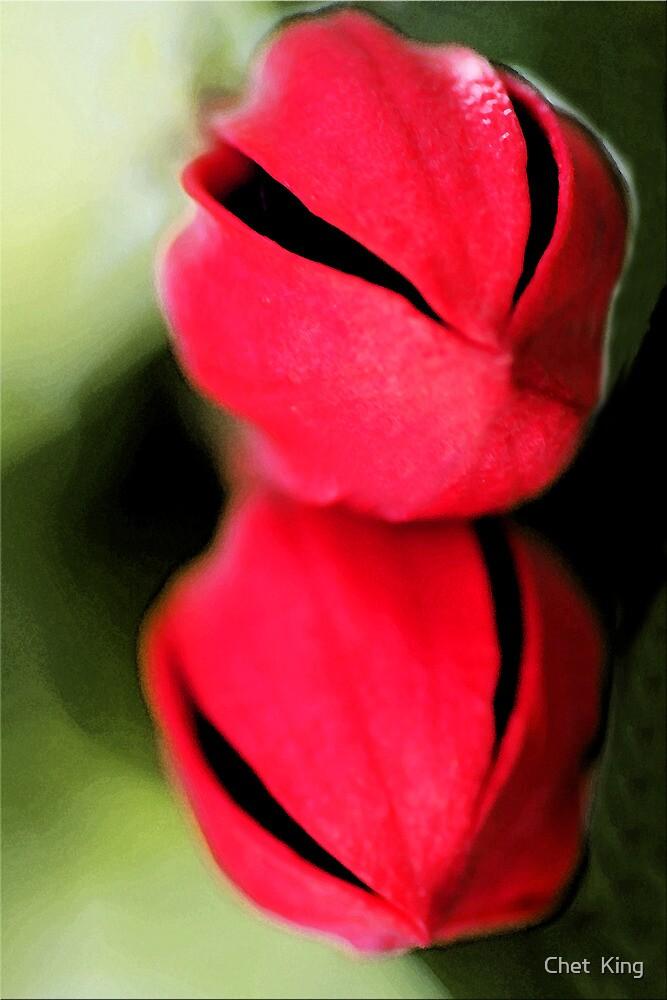 Alien Fuchsia Face by Chet  King