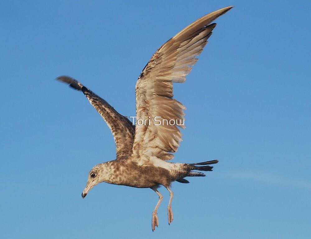 Scruffy Seagull  by Tori Snow
