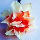1473-SPRING FLOWERS by elvira1