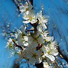 1475-FLOWERS TREES by elvira1