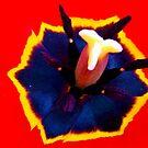 1479-RED TULIP by elvira1