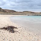 The Coral Beach by dazb75