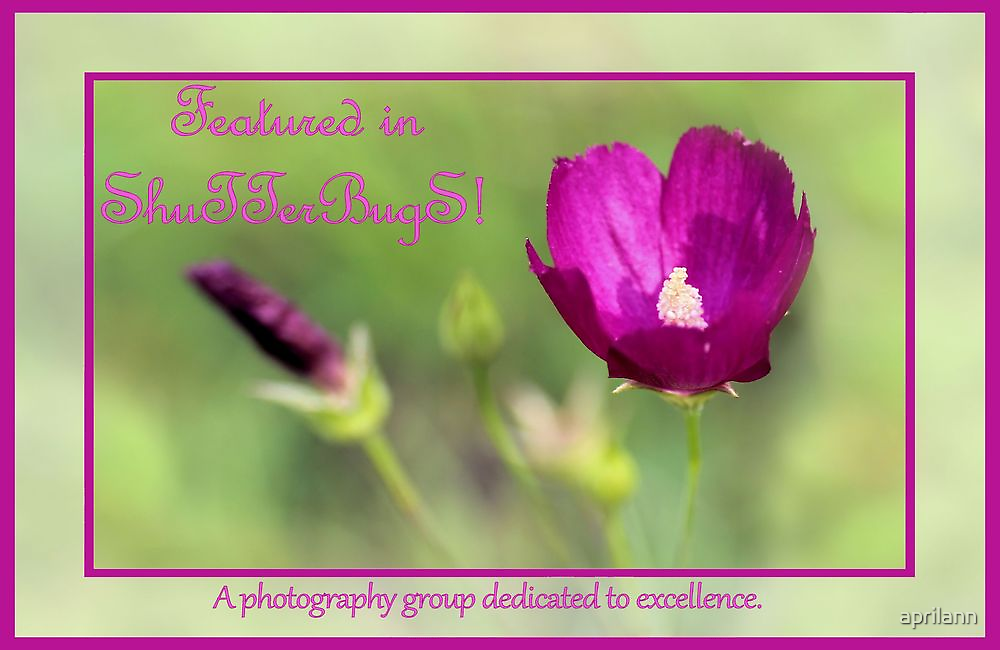 Banner - S - Featured by aprilann