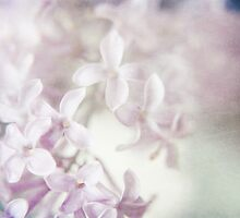 Lilac Dreams by Sybille Sterk