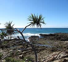 From the cliff top 'Wooli' beach. North coast, N.S.W. Australia. by Rita Blom