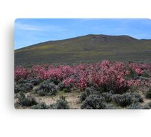 Pink and Yellow Mountainside,outside Reno Nevada USA Canvas Print