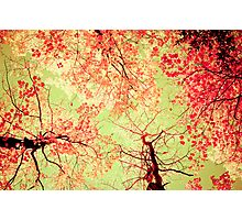 Color Drama Two Photographic Print