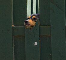 Fenced In by Jason Lee Jodoin