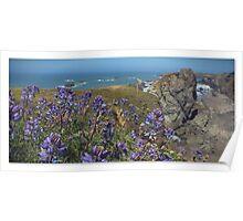 Coastal Lupine Poster