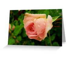 Pink wet rose Greeting Card