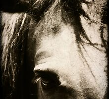 Tangled Forelock, Horse Photography by TNsarajean