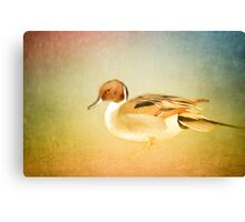 Pretty Canvas Print