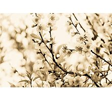 Blossoms Photographic Print