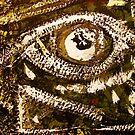 eye in the wall... watching  by banrai
