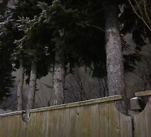 Trees Make Silent Neighbors by Guy Ricketts