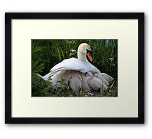 Maternal wings Framed Print